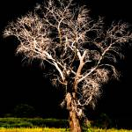 """new mexico tree"" by islamhusseinali"