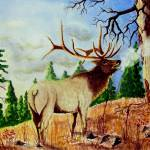 """Bugling Elk"" by JimmySmith"
