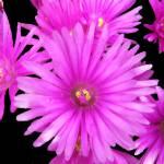"""Botanic Garden 008"" by peterivron"