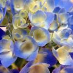 """""""Heavenly Blues"""" by RCdeWinter"""