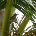 """""""bird_in_palm"""" by gbensonart"""