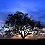 """Viera Tree"" by robertwalkerphotography"