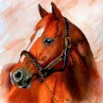 """Horse portrait,Affirmed"" by Texaslady"