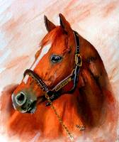 Horse portrait,Affirmed