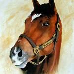 """Horse portrait,Barbaro"" by Texaslady"