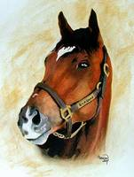 Horse portrait,Barbaro