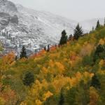 """Colorado Snowstorm"" by stephanieripley"