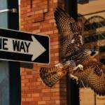 """""""One Way"""" by imageafterimage"""