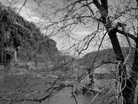 Tree in Harpers Ferry