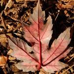 """Last Breath of Autumn"" by rubybgold"