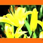 """Neon Lily"" by LydiaDavis"