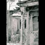 """Still Standing"" by NORTHERNLIGHTS"