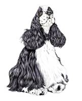 Cocker Spaniel Black & White Parti Portrait
