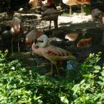 """Flamingo Denver Zoo"" by kdw42"