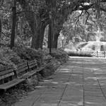 """Savannah Bench"" by bcgphoto"