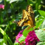 """Butterfly 1"" by KerryFletcher"