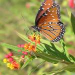 """Butterfly 2"" by KerryFletcher"