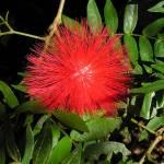 """Red Flower"" by KerryFletcher"