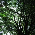 """Green Tree Shade"" by KerryFletcher"