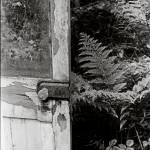 """Door with Ferns"" by celtxian"