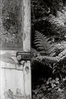 Door with Ferns
