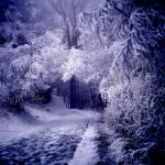 """Smoky Mountains Ice Fog"" by RichardBaumer"