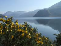 Ennerdale with bushes