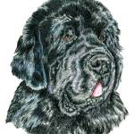 """Black Newfoundland Newfie Dog"" by KathleenSepulveda"