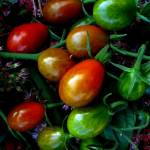 """Grape Tomatoes"" by bavosiphotoart"