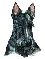 Scottish Terrier Scotty Dog