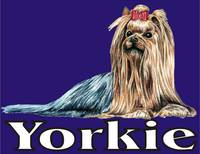 Blue Pop Pup Yorkshire Terrier