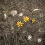 """yellow flower"" by Tritch-Pix"