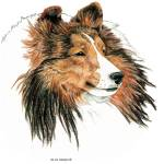 """Shetland Sheepdog Sable Sheltie"" by KathleenSepulveda"