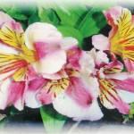 """Garden Flowers"" by norfolkandsuffolkwaters"