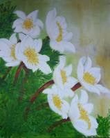 Anemones- forest flowers