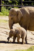 Baby Beco Chases Down Treats at Columbus Zoo