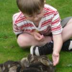 """""""Child&Ducklings"""" by romarkimages"""