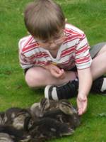 Child&Ducklings