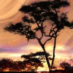 """Tree Silhouettes at Daybreak"" by ElainePlesser"
