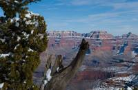 A Grand Canyon Throne 2938