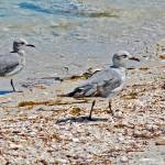 """sandpipers on Florida beach"" by lwoodburn"