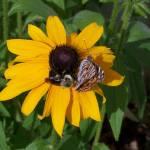 """""""Bee & Butterfly"""" by orangewingnc"""