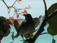 bird in mangrove tree
