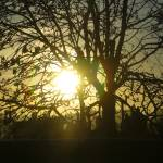 """Sunset Tree"" by pvalentega"