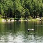"""Crane Fishing at Willow Springs Lake"" by azvirtual"