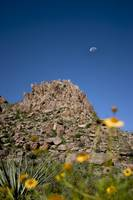 Mountain with Flower and Moon