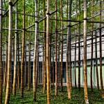 """Bamboo Matrix"" by jonsheer"