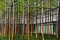 Bamboo Matrix