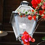 """""""Lamplight"""" by SirenDesigns"""