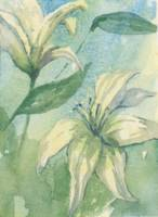 Lillies (WC0016)